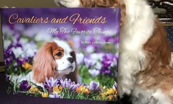 CKCS, Rescues, Cavalier King Charles Spaniels, Show, Agility, Puppies, ACKCS Rescue, Rescue Trust, Breeder, Show dogs, Gift Book
