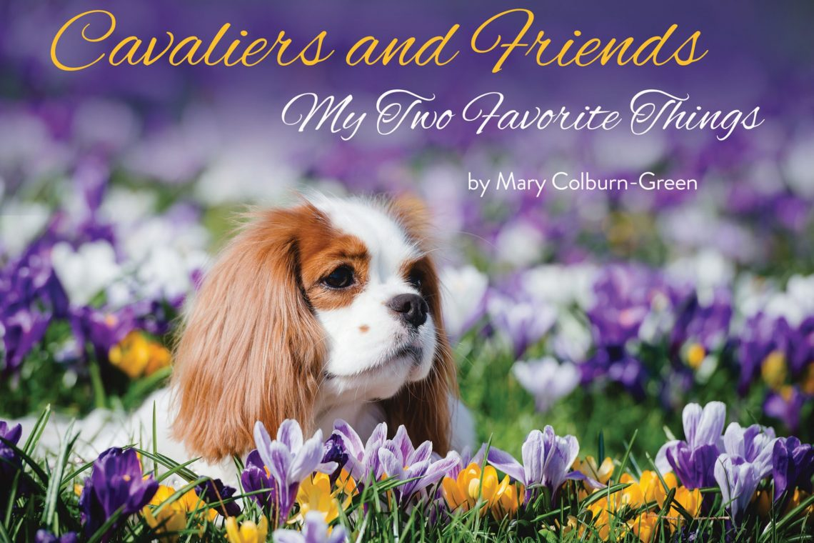 Cavalier, friends, dogs, Mary, Green, Colburn. coffee table, book, rescue, puppies, kids, pets, kennek, country, australia, japan, us, uk