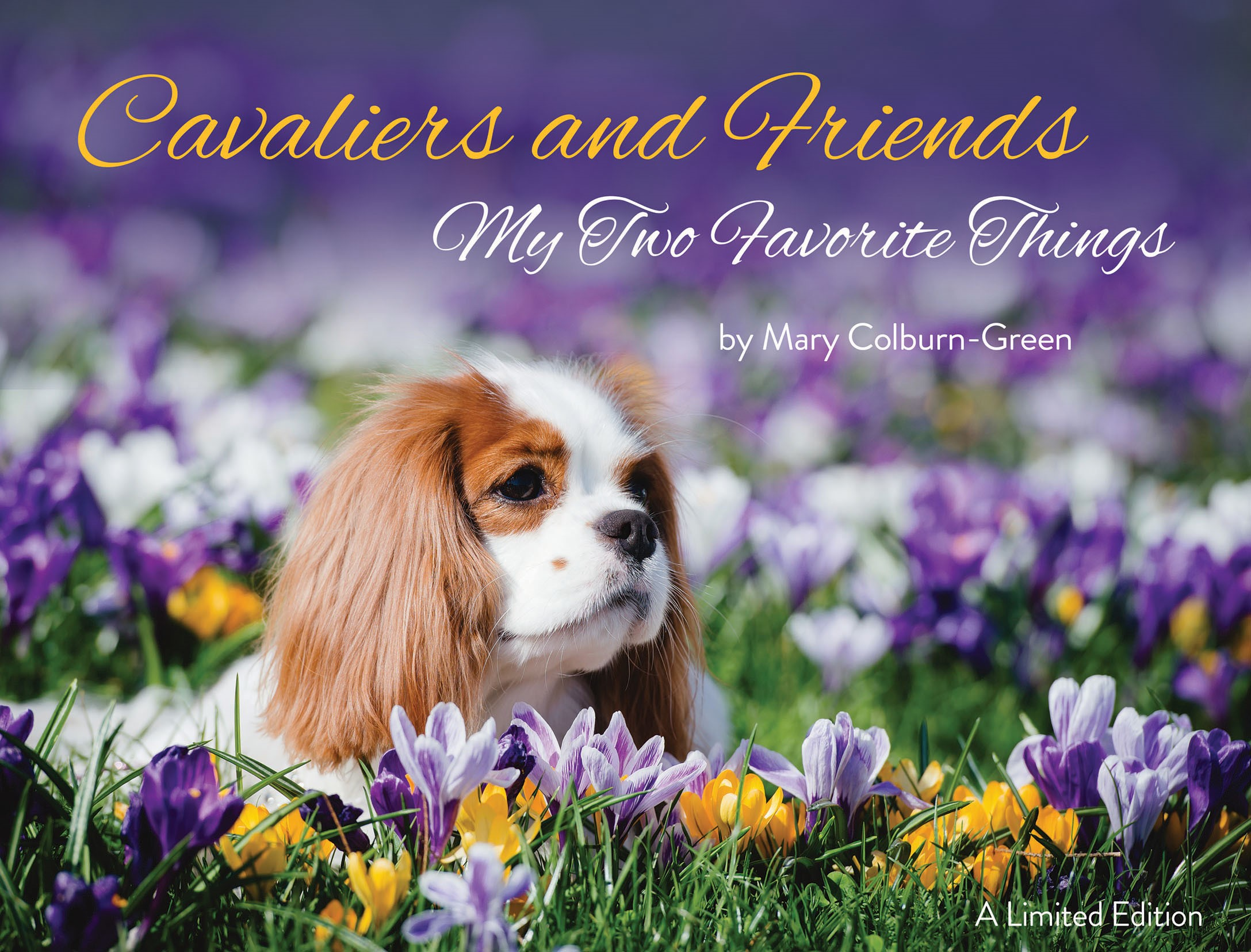 Cavalier, friends, dogs, Mary, Gree, Colburn. coffee table, book, rescue, puppies, kids, pets, kennek, country, australia, japan, us, uk, books cavaliers colburn dogs facebook FB Green mary pictures puppies show dogs spaniel Europe photos friends share pics Cavs ACKCS rescue dog rescue cavalier rescue coffee table gift book